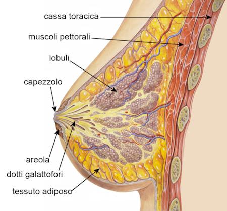 BellezzaSeno Venusia